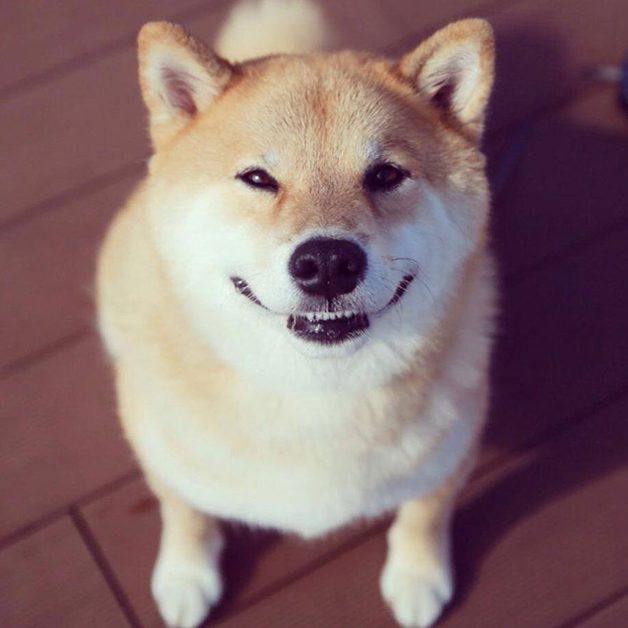 HappyMaru9