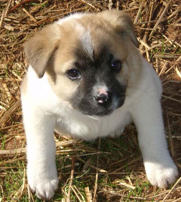 birth-defects-puppy01