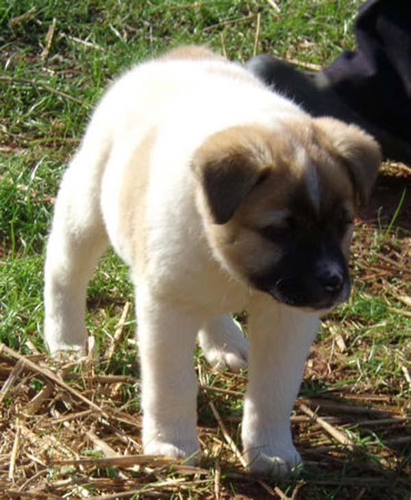birth-defects-puppy02