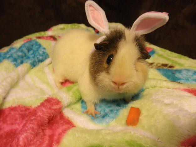 """""""Não está claro para mim se eu já fui um coelho. Ou tipo, nós somos sempre coelhos por dentro, sabe? Apenas esperando para sermos libertados."""""""