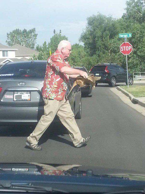 Este homem ajudando uma tartaruga a atravessar a rua: