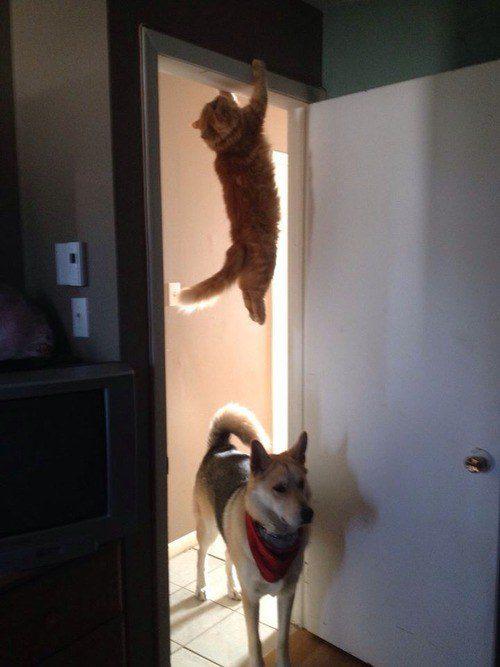 O gato que assistiu muitos episódios de Missão Impossível.