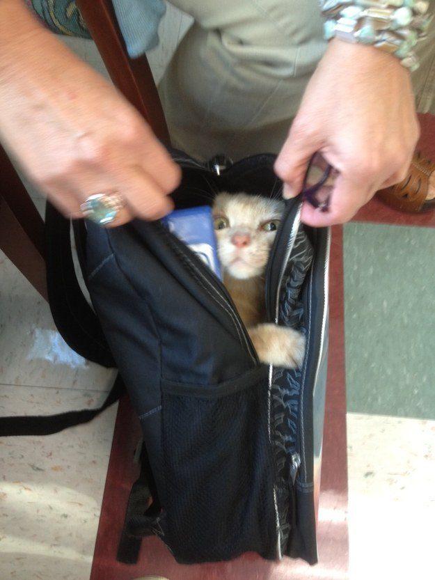"""O gato que gostaria de ter perguntado o que """"surpresa"""" queria dizer antes de concordar em participar."""
