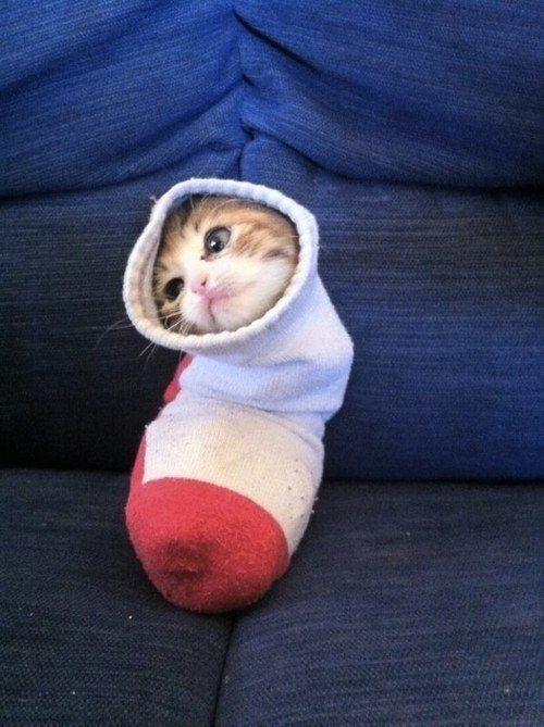 O gato que sabe onde sua outra meia foi parar, mas nunca dirá.
