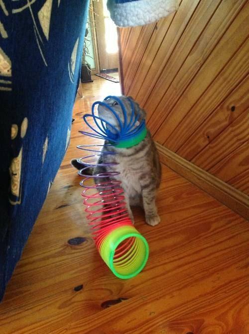 O gato que insistiu em se vestir esta manhã.