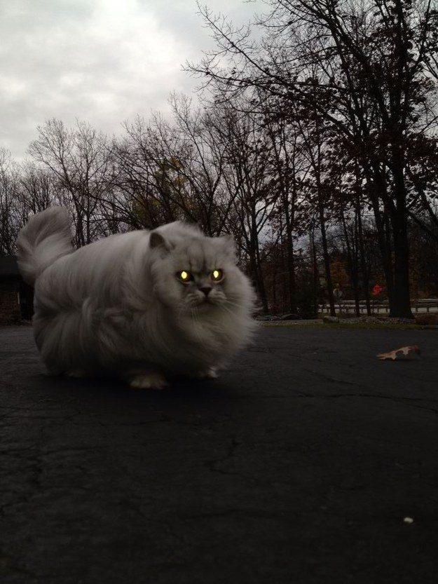O gato que nunca se preocupa em verificar a previsão do tempo antes de pedir para dar uma volta.