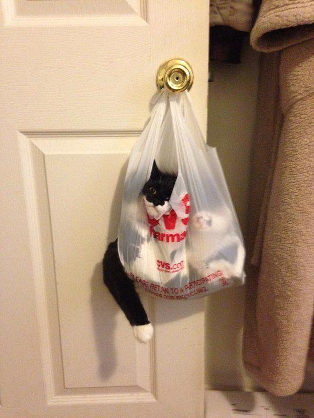 O gato que encarou uma sacola muito mais esperta do que ele:
