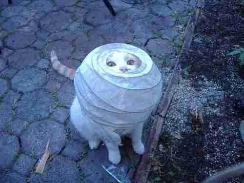 O gato que ainda não conseguiu entender como montar aquela luminária da Ikea.