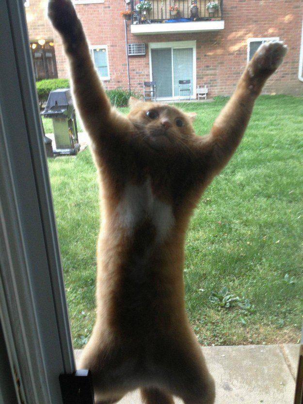 O gato que não teve um final feliz quando começou a escalar aquela tela.