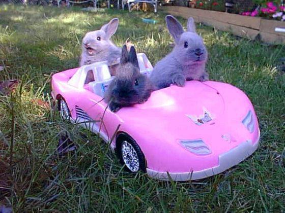 """""""Cara, eu ainda nem liguei o carro."""""""
