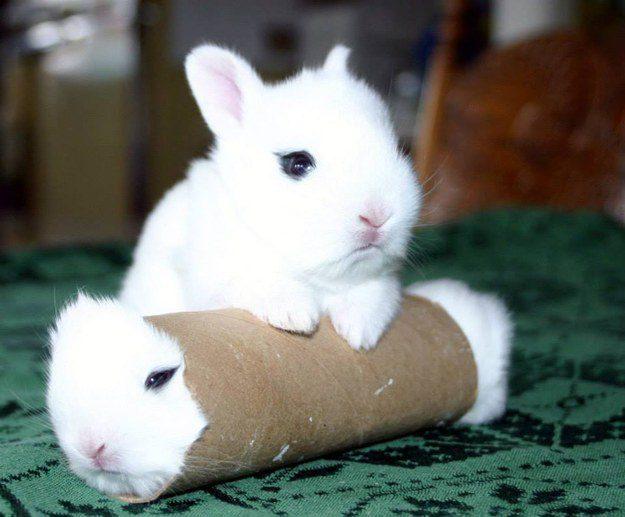 """""""Cara, você sabe onde o Ralph foi? Ele começou a explorar este túnel e então BUM. Sumiu."""""""