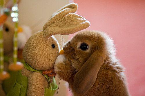 """""""Qual de nós é o coelho de pelúcia??"""""""