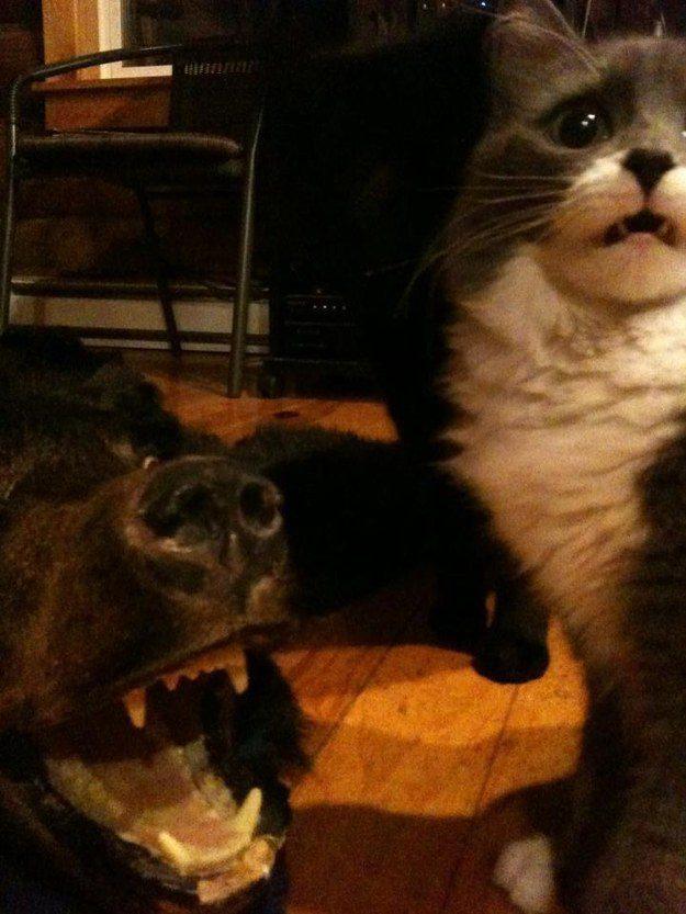 O gato que está preocupado que talvez seja o próximo.