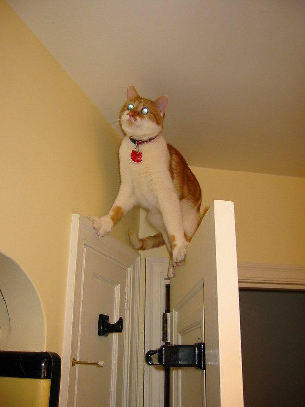 O gato cuja obstinada busca de um ponto de laser fez com abandonasse momentaneamente o seu bom senso.