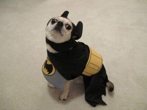 Cachorro que é o herói que pensa que merecemos.