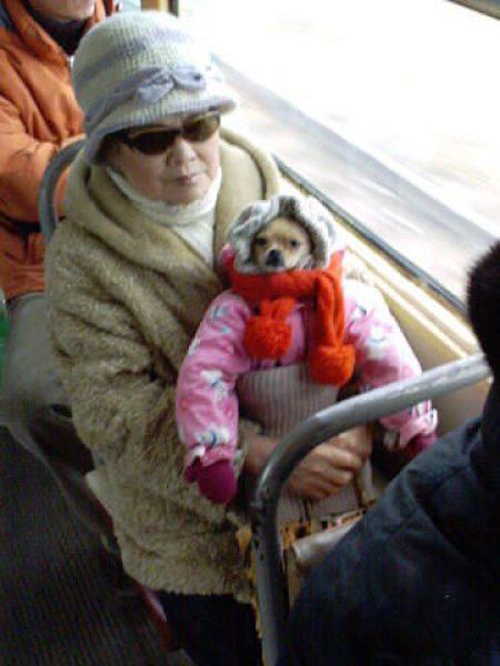 Cachorro pronto para uma longa e fria viagem.