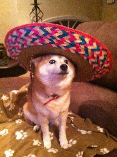 Cachorro com um sombreiro bem grande.