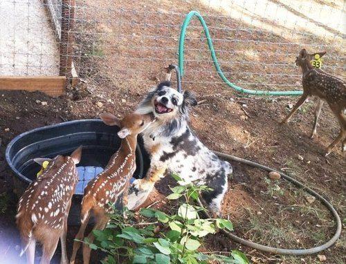 Cachorro muito feliz com seus novos amiguinhos.