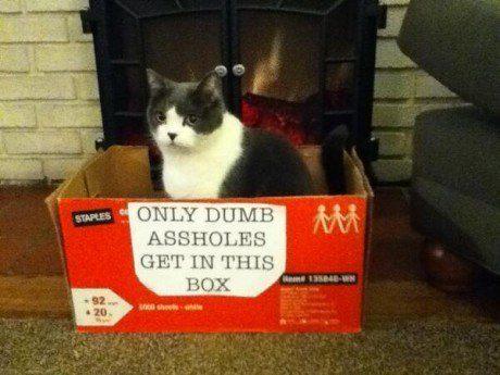 O gato que nunca aprendeu a ler.