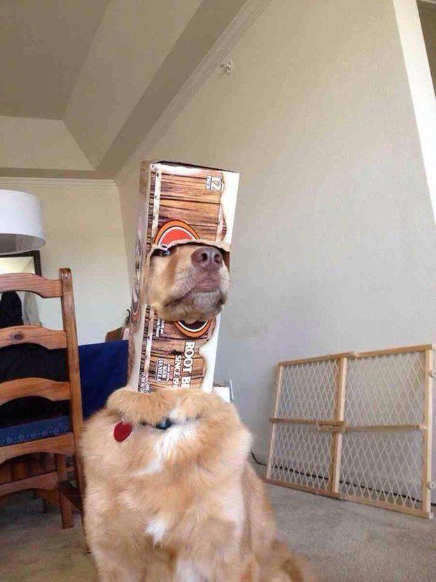 Cachorro astronauta.