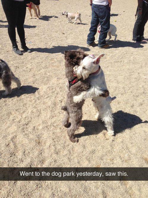 Cachorros que acreditam na real possibilidade da paz mundial.