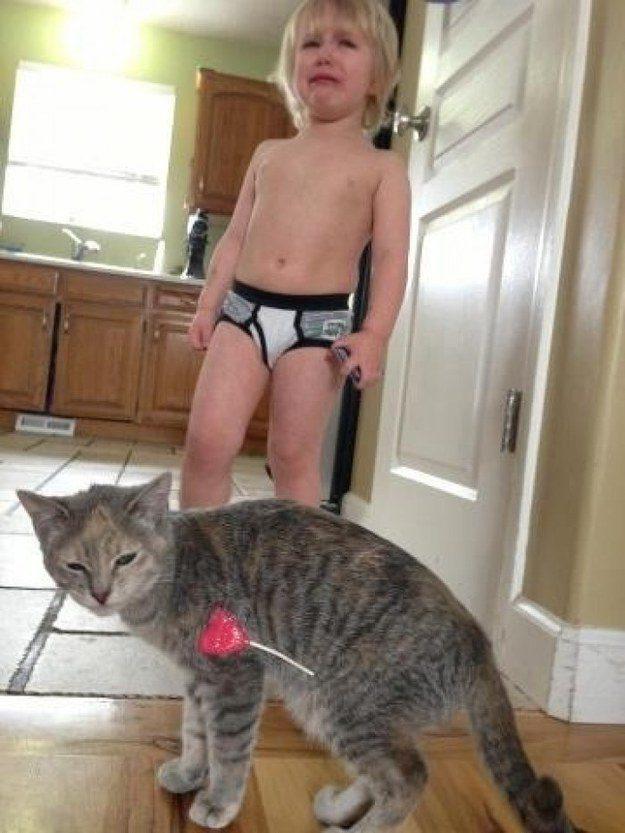 O gato que não entende o conceito de destruição mútua.