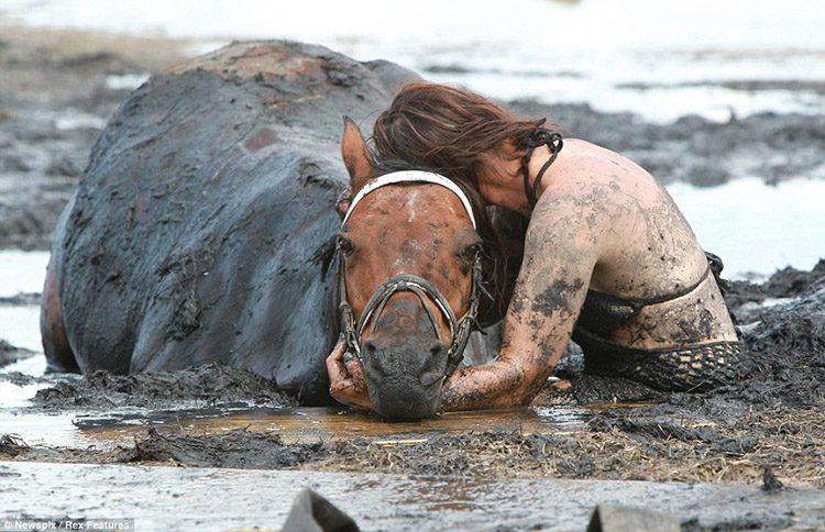 resgate_cavalo