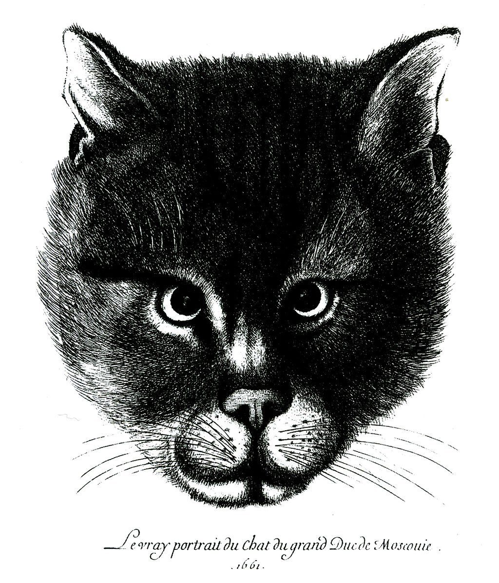 The cat of Tsar Alexis of Russia 1661
