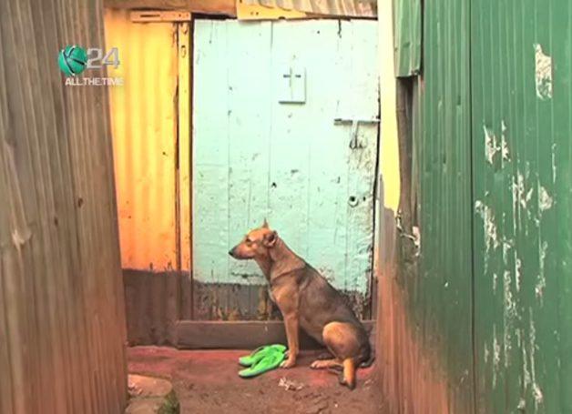 cachorra-oscar4