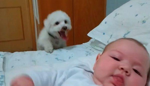 cachorro insistente