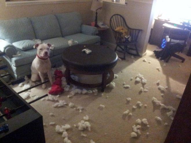 cachorros-inocentes-1
