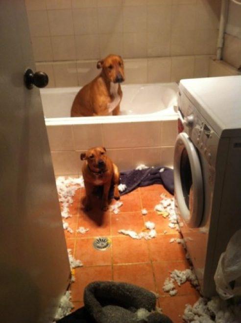 cachorros-inocentes-11