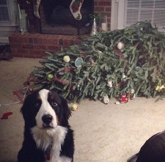 cachorros-inocentes-13