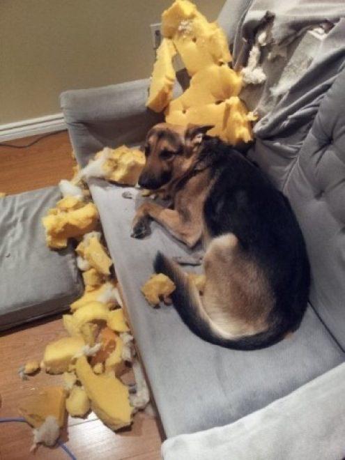 cachorros-inocentes-4