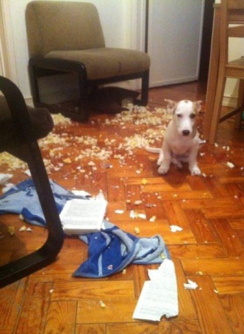 cachorros-inocentes-7