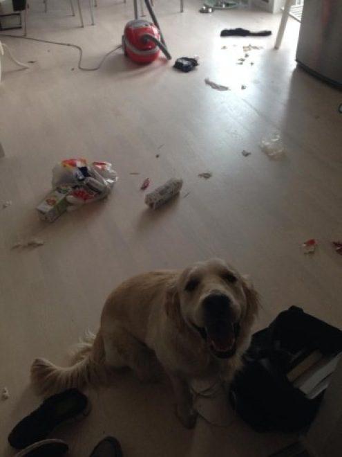 cachorros-inocentes-8