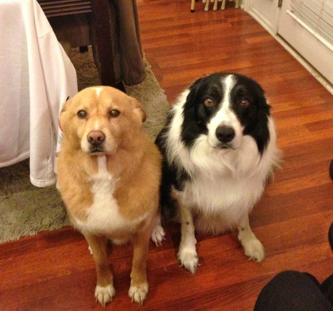 cachorros-inocentes-9