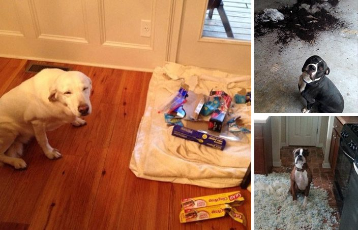 cachorros inocentes