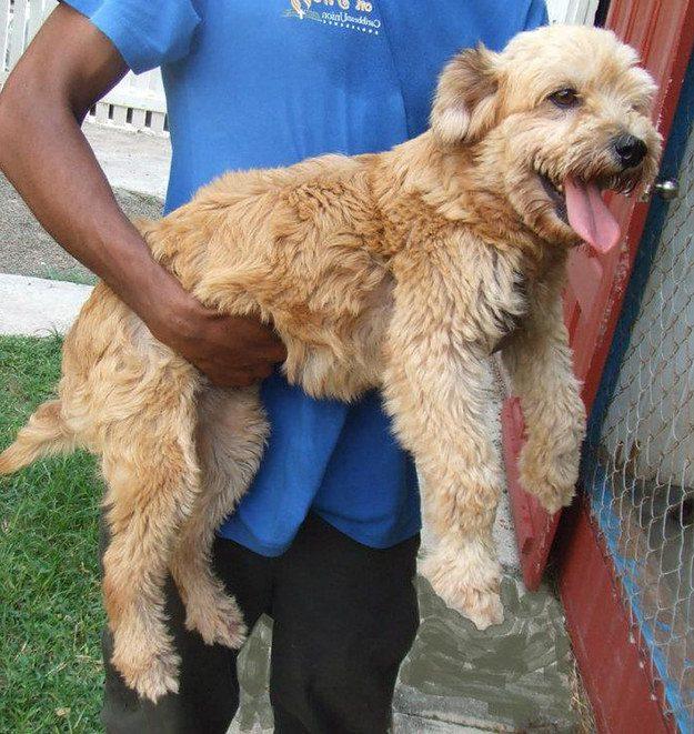 cachorros-resgatados-1-1