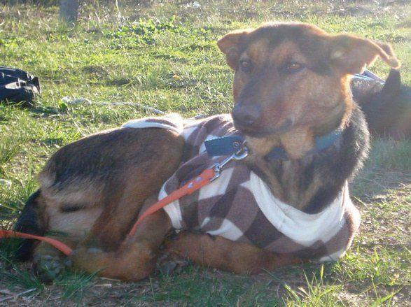 cachorros-resgatados-14-1