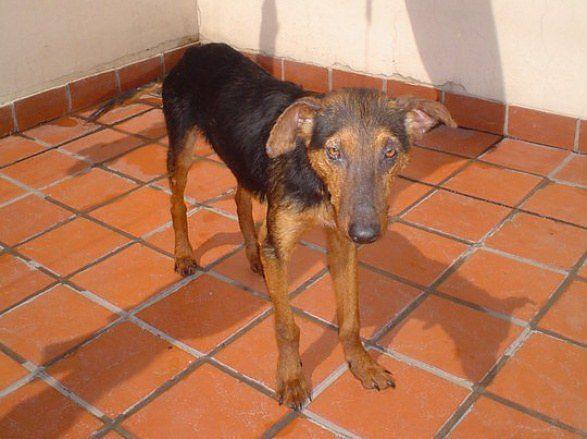 cachorros-resgatados-14