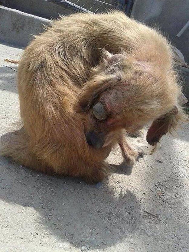 cachorros-resgatados-15