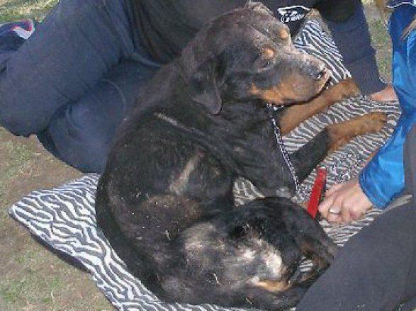 cachorros-resgatados-16