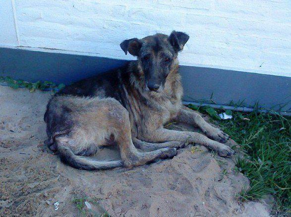 cachorros-resgatados-17