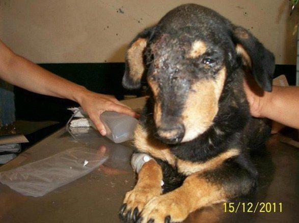 cachorros-resgatados-18