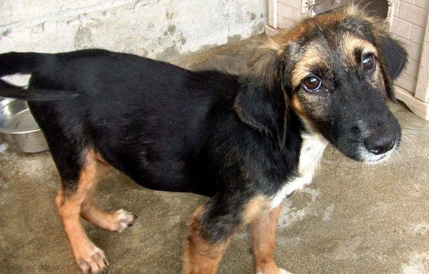 cachorros-resgatados-3-1