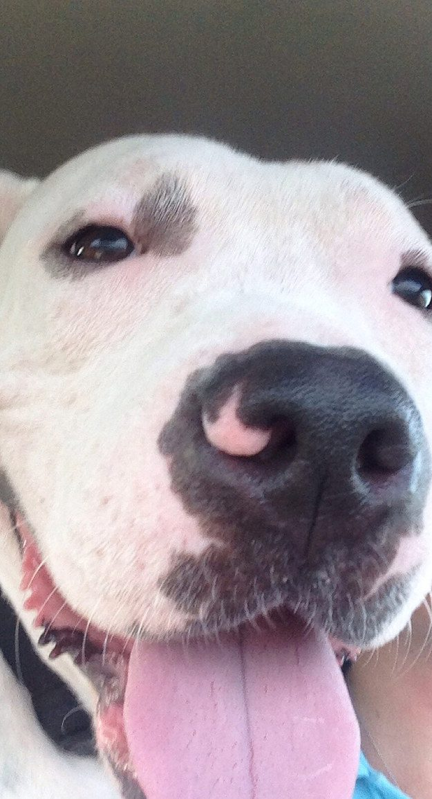 cachorros-resgatados-9-1