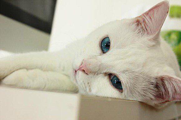 gato-setsu-beleza-1