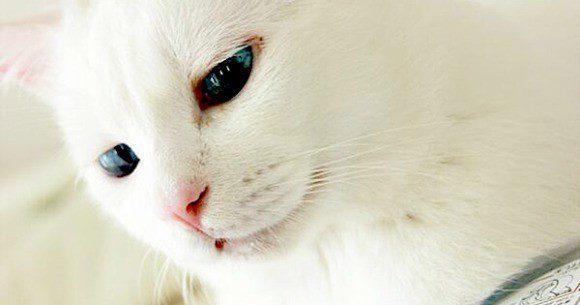 gato-setsu-beleza-2