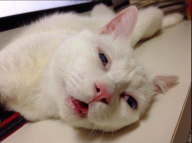 gato-setsu-beleza-7